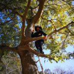 木登りベテラン