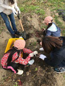 シャベルで回りを掘り起こし、仕上げはスコップで慎重に土をかき分けて・・・ いっぱいあるある!
